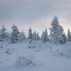 Winter wereld