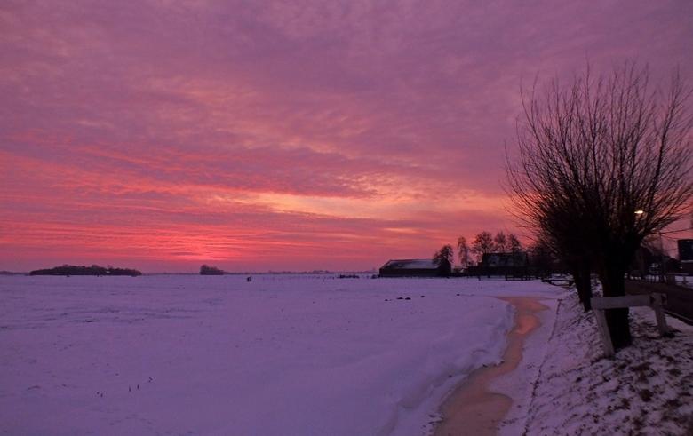 good morning winterwonderland - Good morning winterwonderland!!! Een prachtige zonsopkomst over een besneeuwde akker met een knotwilgenlaantje. Kan he