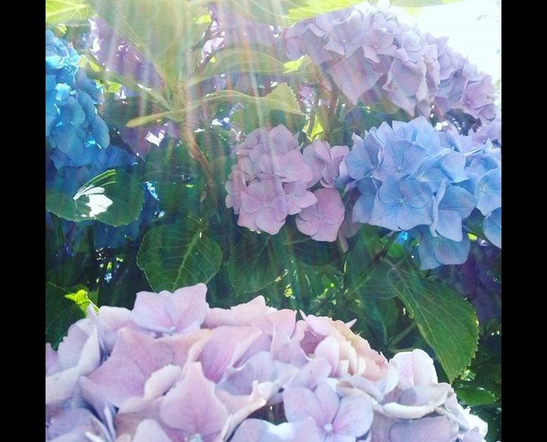 Bloemen met zonnestraal -