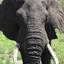 front  olifant