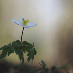 In volle bloei