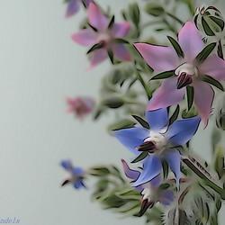 bloemetjes met effect