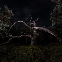 Nightime in the forest