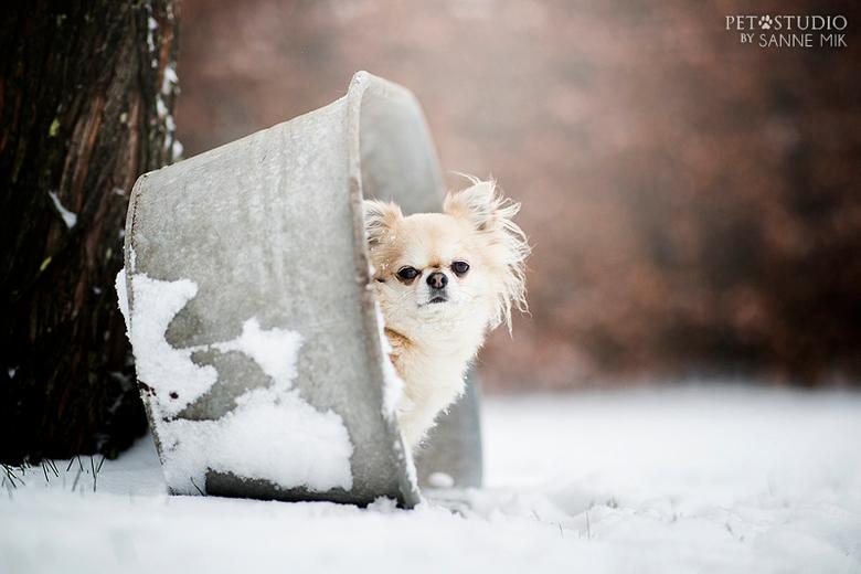 Snowy Mr. Sam -