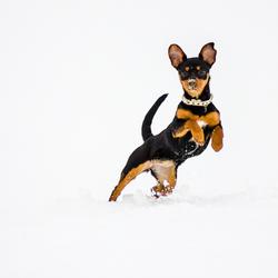 Puppy in de sneeuw