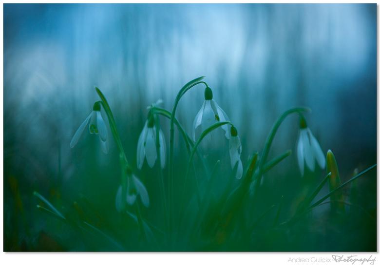 Fading away..... - .......in the dark.<br /> Amelisweerd van de week. Vol met krokusvelden bijna op het eind van de bloei.... Het was nog steeds een
