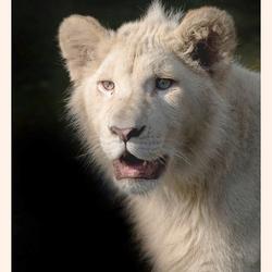 Witte Leeuw Credo
