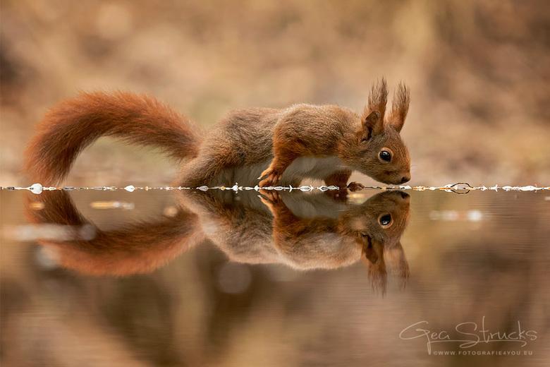 1229squirrels19_GSweb