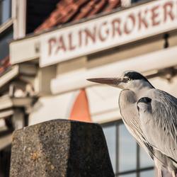 Reiger Volendam