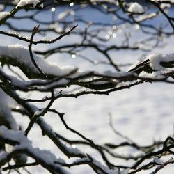 wintertakken