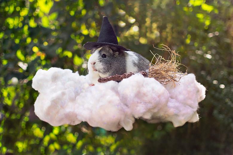 """Mieps Potter - Kleine Mieps Potter maakt even een pitstop op een wolk. <img  src=""""/images/smileys/smile.png""""/>"""