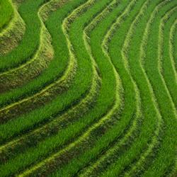 Longji Lines