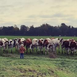 De koeienfluisteraar