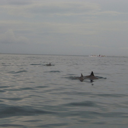 dolfijnen bij Bali