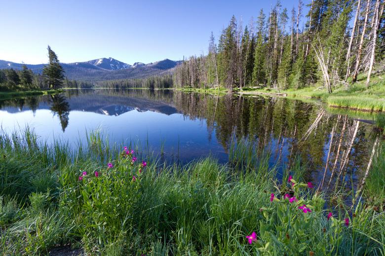 Reflecties in Yellowstone NP - Reflecties in een klein meertje in Yellowstone NP op een mooie, vroege ochtend.