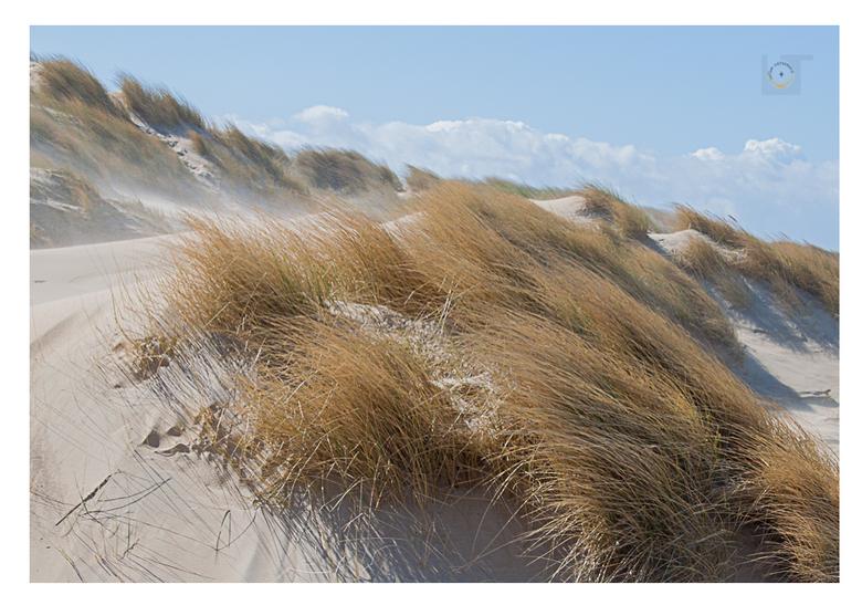 Les Dunes -