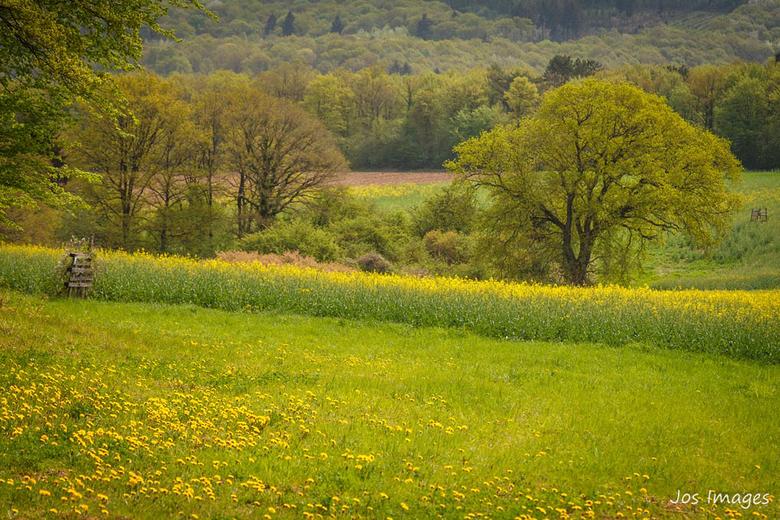 Landelijk - Momenteel is de natuur bijzonder mooi groen aan het worden. En dan het geel van de koolzaad en paardenbloemen is een lust voor het oog. Is
