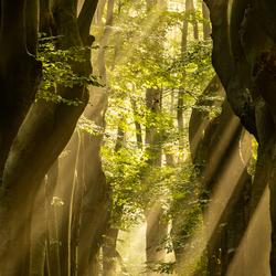 Magische ochtend in het bos