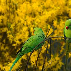 Groene vriendjes