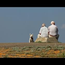 Met de hond naar zee....