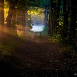 Ochtend in het sprookjesbos