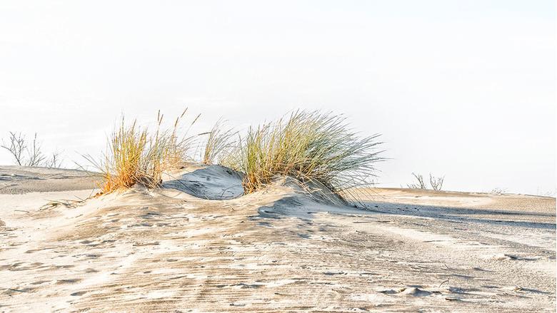 Duinen highlighted  - Van de bossen naar de duinen, heerlijk gewoon om door de duinen te struinen en proberen leuke composities te vinden. <br /> <br