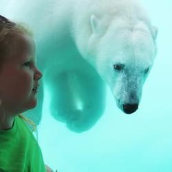 IJsbeer en meisje