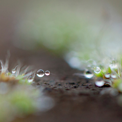 teardrops of Nature
