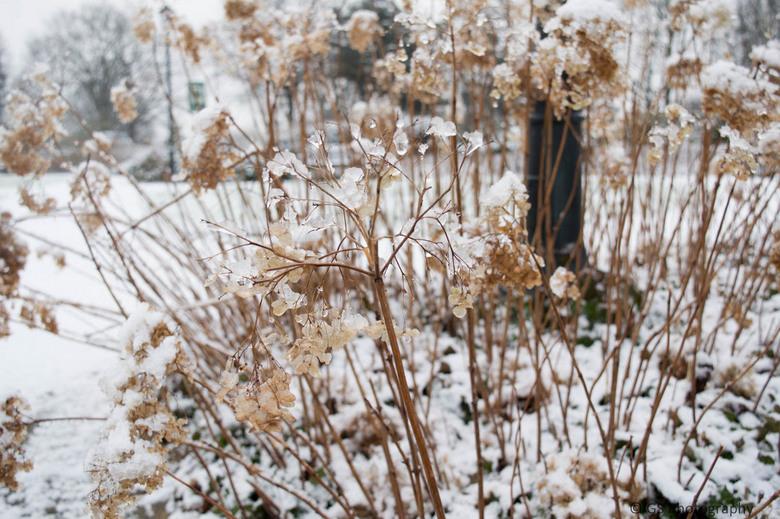 Contrast in de sneeuw -