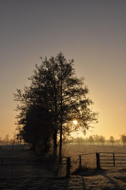 Op komende zon in de winter -