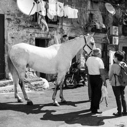 Midden in Palermo