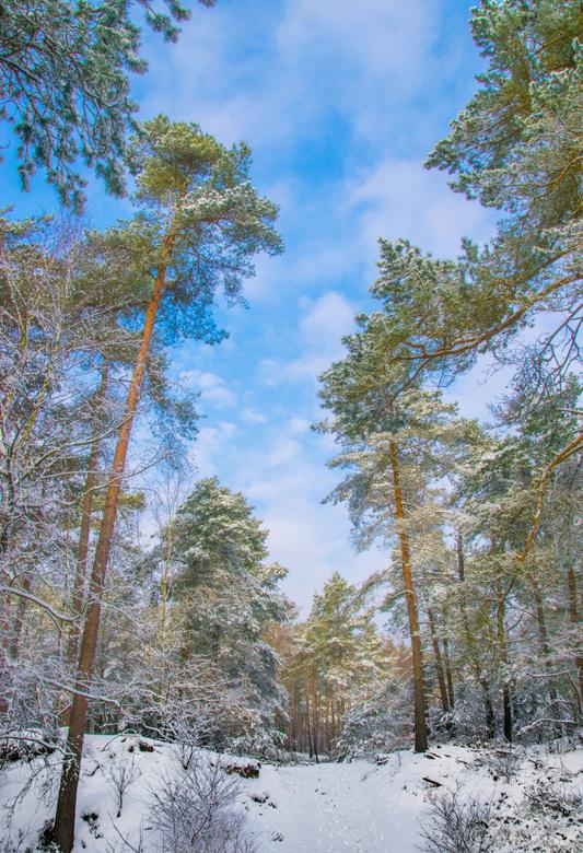 sneeuw in de zon -