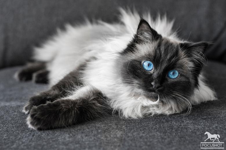 Blue eyed beauty -