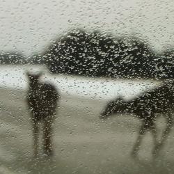 Herten op de Highway