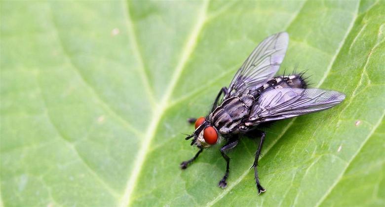 """It's Alive - Gisteren een eerste poging in Macro gedaan bij """"vlindersaandevliet"""" en vandaag ook thuis in de tuin nog wat geschoten waarbij i"""