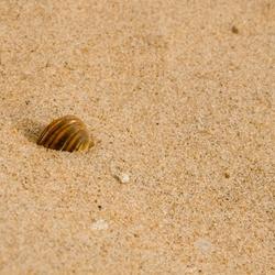 Zand, zand, zeeschelp