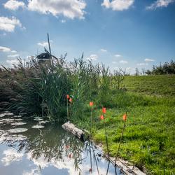 Driemans polder, Stompwijk