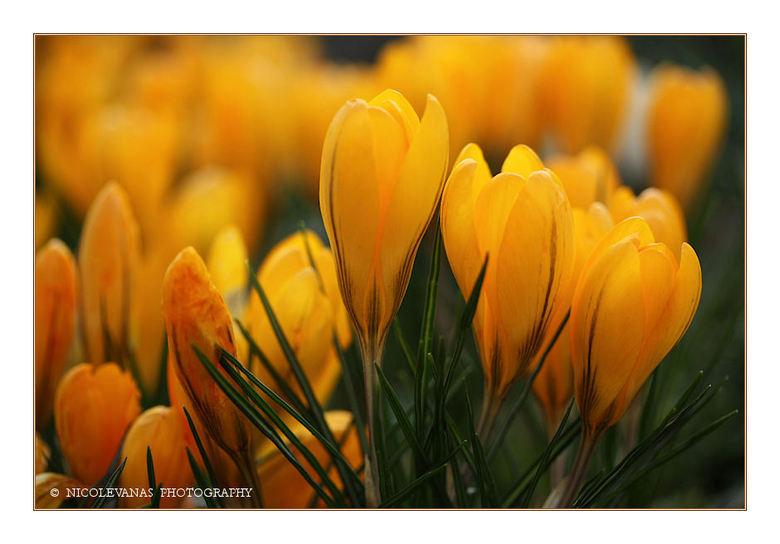 Op zoek naar de Lente - De meteorologische lente mag wel begonnen zijn maar het is nog winters koud buiten.<br /> <br /> Vandaag eens op zoek naar w