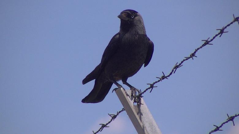 Bird On A Wire Dieren Foto Van Coonart Zoomnl