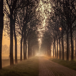 ochtendgloren met mist