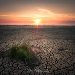 A dry Wadden Sea