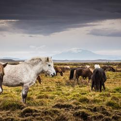 IJslanders bij hekla-vulkaan