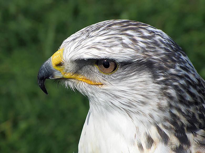 up close and personal - tijdens een vogelshow geschoten