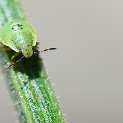 groen beestje