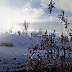 winterzon1