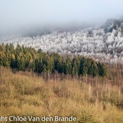 winter in de ardennen