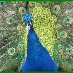 Wat zijn je veren mooi