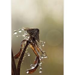 waterdrager....