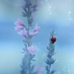 Ladybird illusion