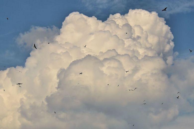 Meeuwen... - Afgelopen zondag wezen fietsen tussen de maas en Waal...<br /> Prachtig weer met mooie wolkenluchten...